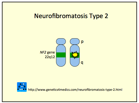 neurofibromatosis genetic disorder that ceases cell Neurofibromatosis type 1 (nf1) and type 2 (nf2) are neurocutaneous disorders inherited as autosomal dominant genetic syndromes autosomal dominant genetic transmission indicates that one copy of the altered gene is required for phenotypic expression.